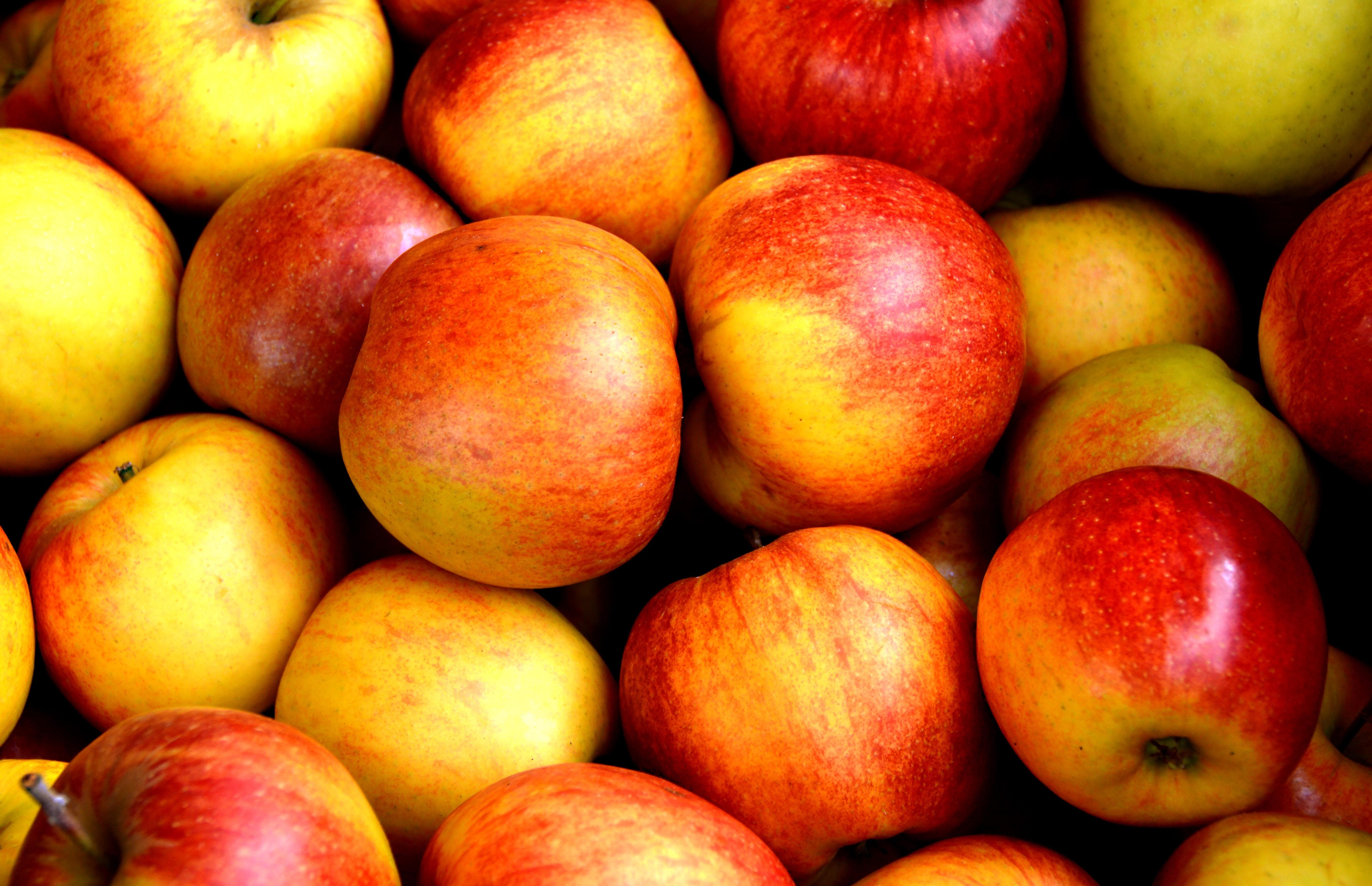 apple bodybuilding
